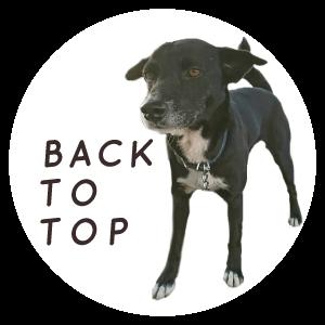 TOPへ戻るボタン